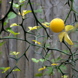 by Roseann Jech - Nature Up Close Trees & Bushes ( flora plody, pixopend, relita )