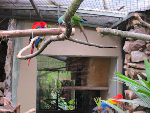 Photo: Macaws