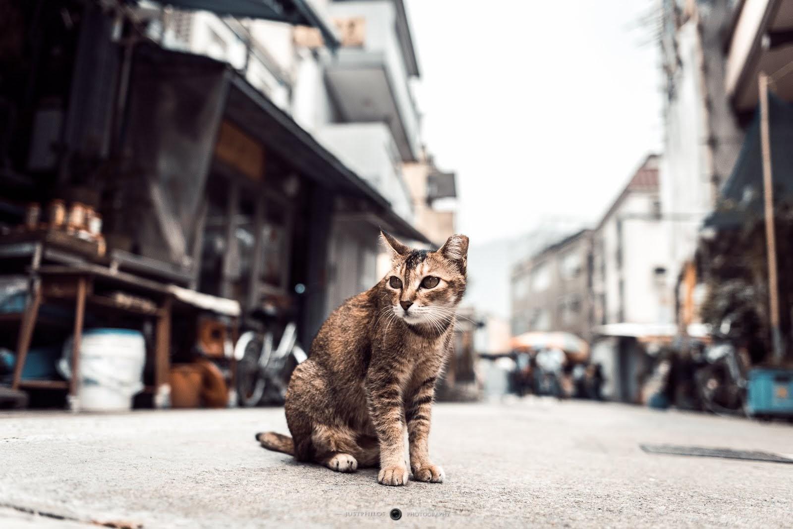 大澳是這次香港行看到最多貓的地方,而且基本上都不太怕遊客。