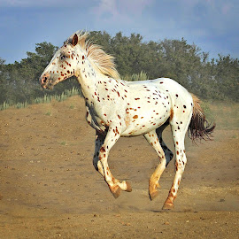 by Michelle Hunt - Animals Horses (  )