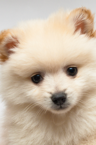 Cute Puppy Wallpapers Apk 11