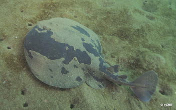 Photo: Electric Ray