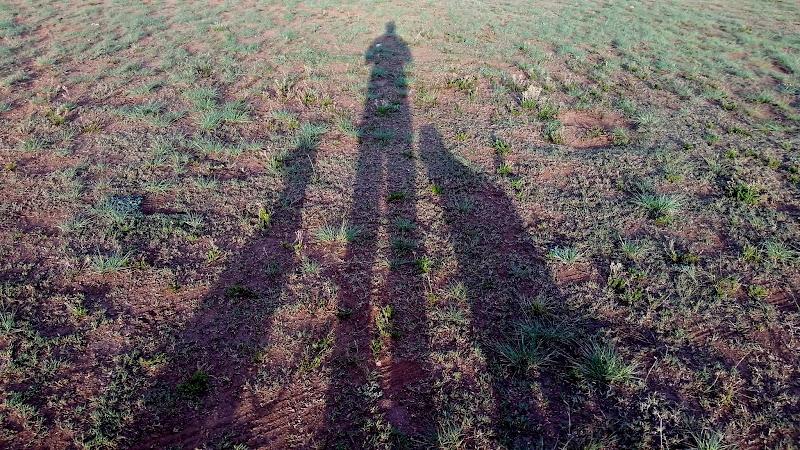 Photo: Dog shadows