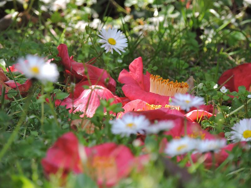 Un prato di fiori!  di Eleonora_Mos