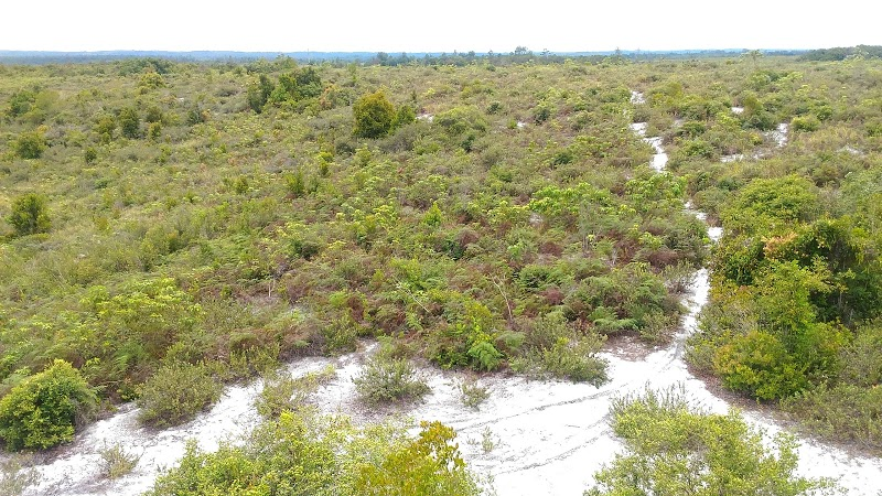 Cagar Alam di Kalimantan Timur untuk Melindungi Tanaman