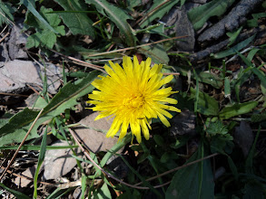 Photo: A  FLOWER IN FARRY MEADOWS