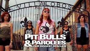 Pit Bulls & Parolees: Our Biggest Rescues thumbnail