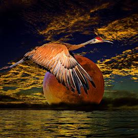 by Augustine Juliano - Digital Art Animals