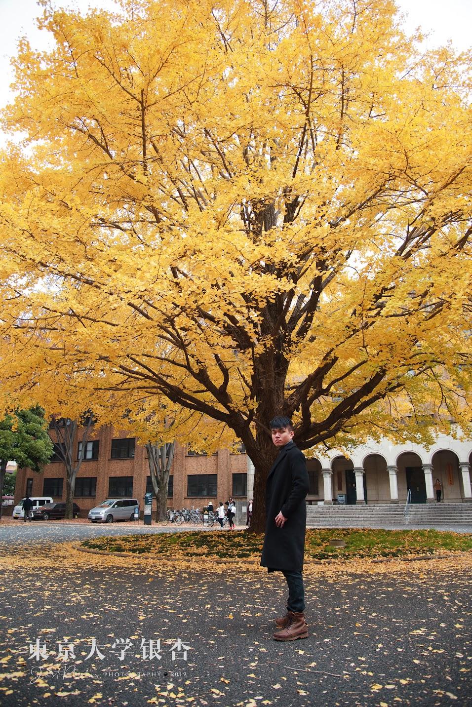 在這麼壯觀的銀杏下當然要假掰的來一張韓系的照片。