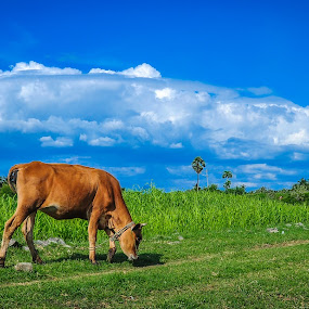 Mother Nature by Gowri Shankar - Landscapes Cloud Formations ( clouds, field, grass, cow )