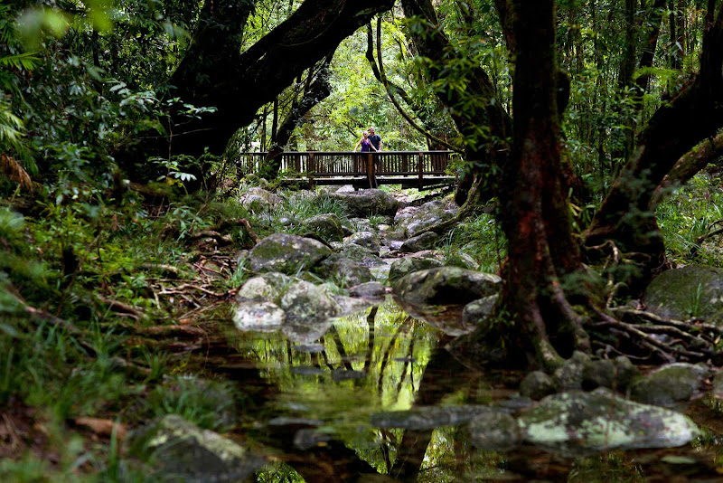 Mosman Gorge and Daintree Rainforest are calm, pleasant excursions north of Cairns, Queensland.