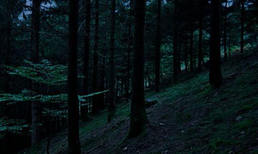 無料解谜Appの黒い森からの脱出 記事Game