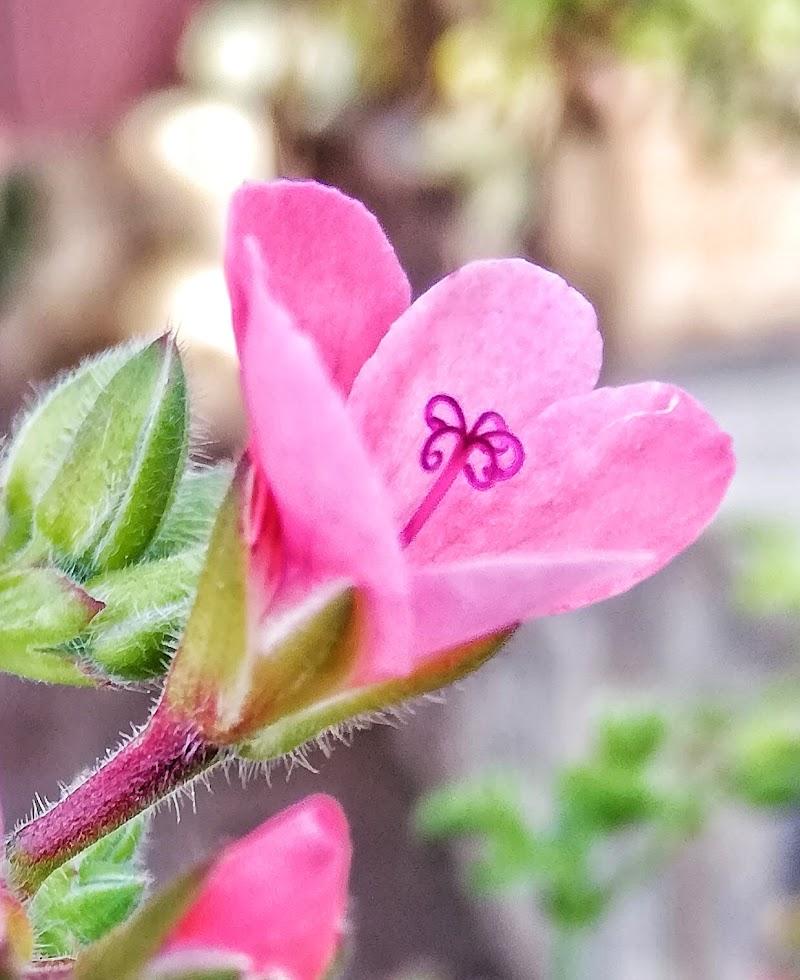 Fiore bellissimo di Tiburon64