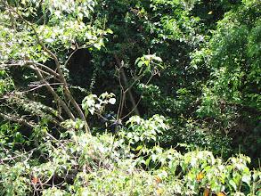Photo: Spot the pair of birds