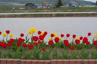 Photo: 北竜町の景色・皐月の4