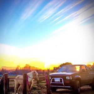 ダットサントラック 4WD  のカスタム事例画像 うたさんの2021年02月13日19:35の投稿