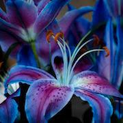 Какие цветы нельзя держать дома: фото и приметы