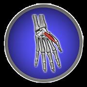 Musculos del cuerpo humano 1.0 Icon