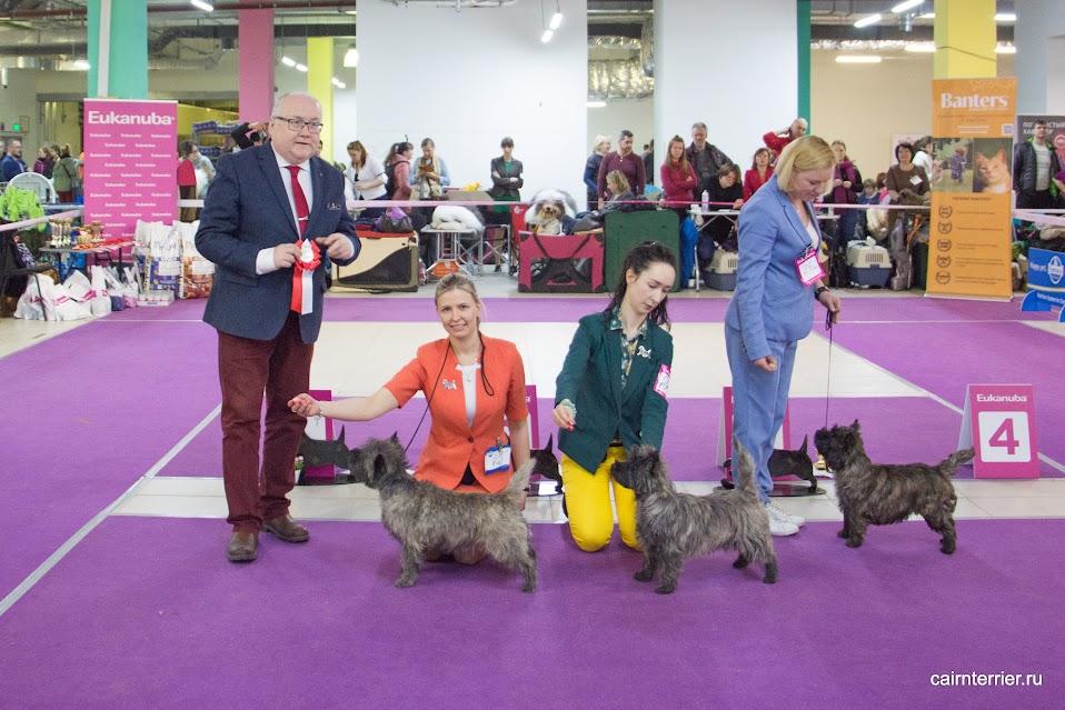 Фото керн терьеров с хендлерами и экспертом на призовом месте выставки