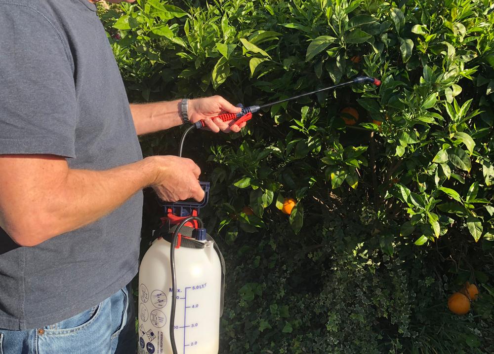 As laranjas foram o produto com mais pesticidas concentrados, de acordo com a última pesquisa da Anvisa sobre o tema
