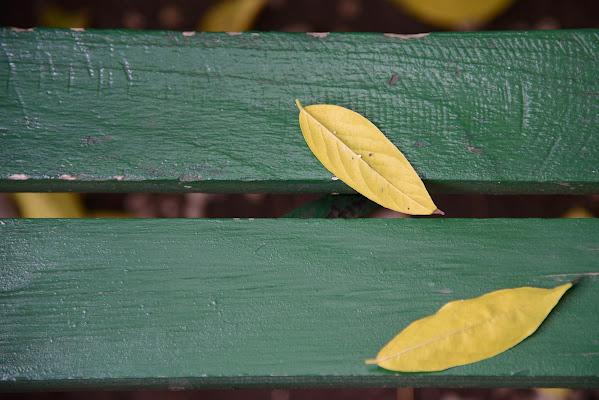 Le foglie morte di Domenico Cippitelli