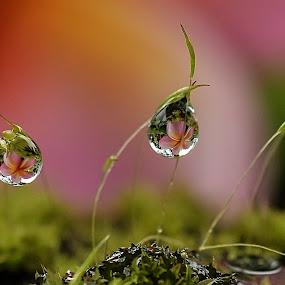 tak setajam sembilu by ERFAN AFIAT SENTOSA - Nature Up Close Water (  )