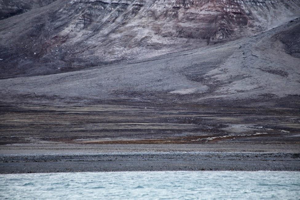 Svalbard, niedźwiedź polarny