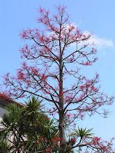 Photo: Странное-престранное дерево