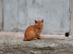 Photo: 這小貓應該還很年輕,不過他長相好兇~