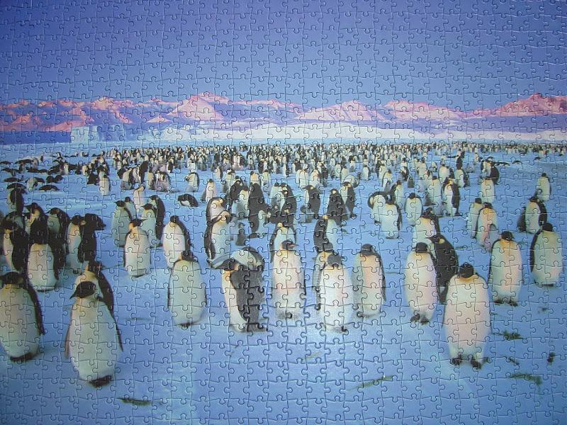 Terminamos el rompecabezas de los pingüinos.