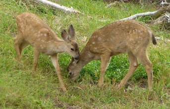 Photo: Pt Lobos State Reserve