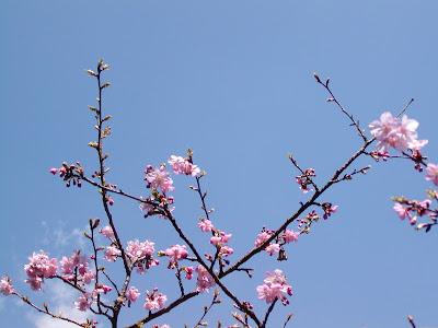 flores 080316