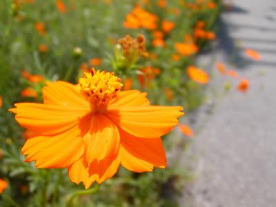 Flores y cielo Agosto