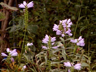 flores Sep28 up