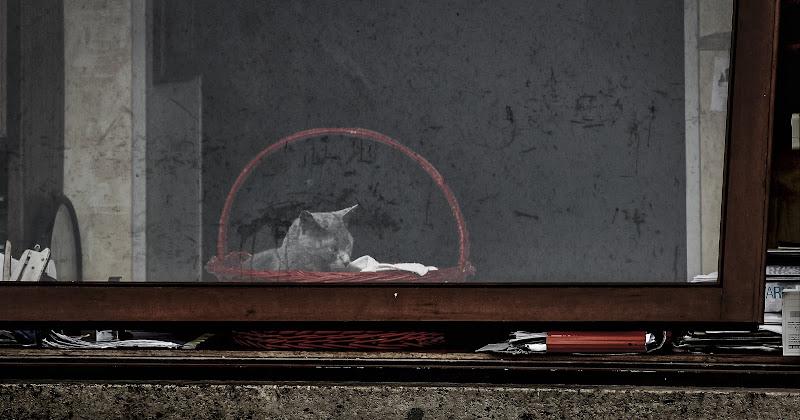 """"""" E i gatti guardano nel sole Mentre il mondo sta girando senza fretta """" di D. Costantini"""