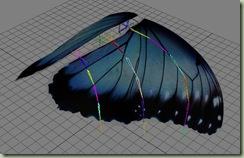 butterfly_anim