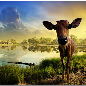 How Do I Look..? by Ketut Manik - Animals Other