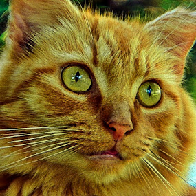 Strike a pose  by James Cole - Animals - Cats Portraits