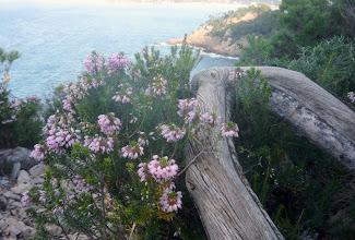 Photo: L'art floral grandeur nature.