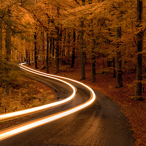 E v e r y - R o a d - H a s - 2 - D i r e c t i o n s. by Manu Heiskanen - Uncategorized All Uncategorized ( lights, curvy, tree, autumn, fall, headlight, trees, road, yellow, leaves, longexposure, paulinawolekpardon,  )
