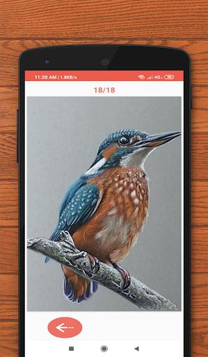 How to Draw Birds 3.0 screenshots 2