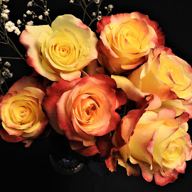 Roses by Carol Leynard - Flowers Flower Arangements ( flowers, yellow, bouquet, roses )