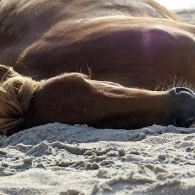 Sleeping on the beach by Mona Marie Hess - Novices Only Wildlife ( mona,  )