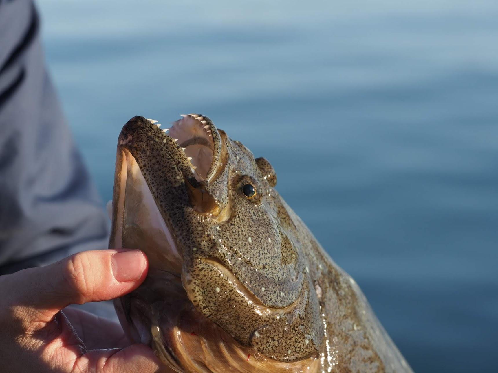 ヒラメを釣り上げた