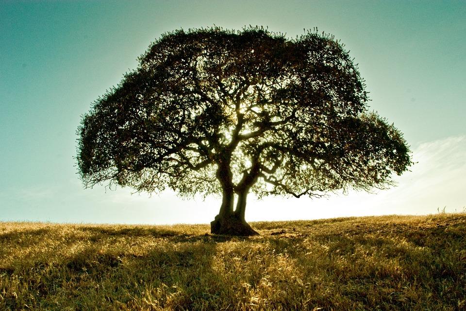 Tree, Landscape, Field, Branch, Ecology, Bright, Sun
