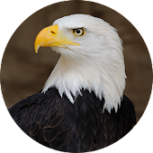 Eagle Sounds and Ringtone
