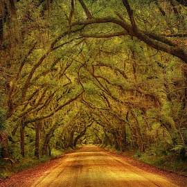 by Larry Mccrea - Landscapes Forests