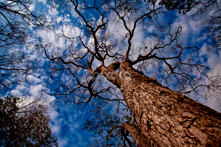 by Eko Sumartopo - Landscapes Forests