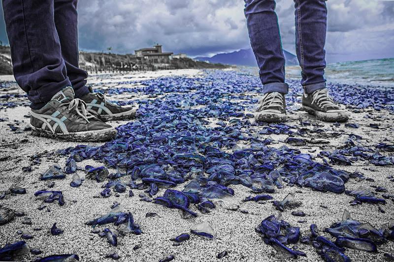 """""""scarpe da medusa blu"""" di alessio capirchio"""