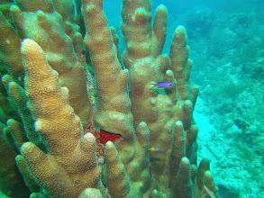 Photo: Coral